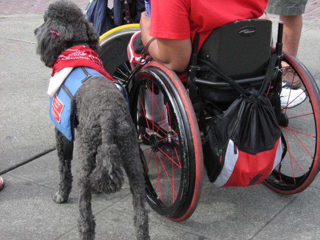 (肢體障礙輔助犬。來源:Lisa Norwood)