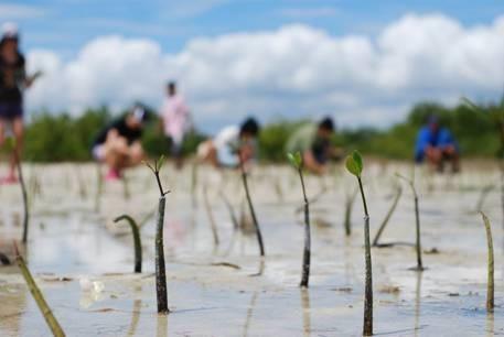 願景青年在菲律賓進行的「紅樹林復育計畫」/圖片提供:丁元亨