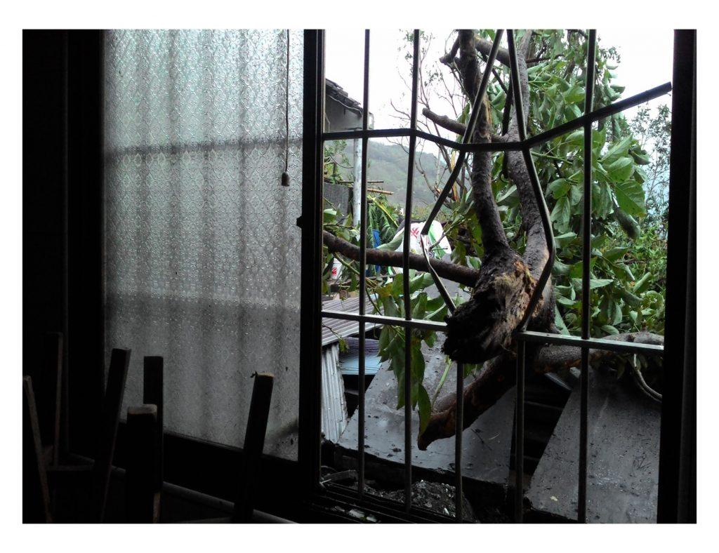 險些傷及楊維楊父親,刺穿玻璃而入的倒樹。/圖片提供:楊維洋