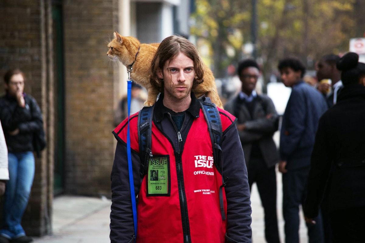 唯一推薦 關於動物的電影【遇見街貓BOB】